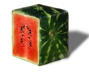 Kubo formos arbūzas